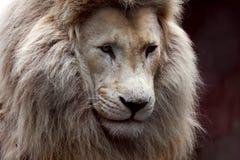 lwa biel obrazy royalty free