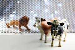 Lwa i krowy model Zdjęcie Stock