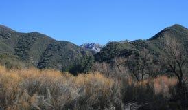Lwa jaru góry Obraz Royalty Free