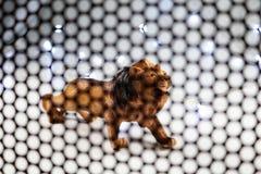 Lwa modela tło Fotografia Stock