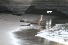 lwa morze Zdjęcie Stock