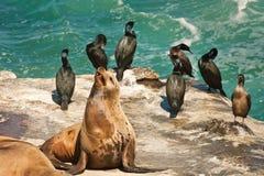 lwa morze obrazy royalty free