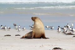 lwa morze Zdjęcie Royalty Free