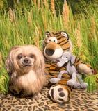 Lwa pies w dżungli Fotografia Royalty Free