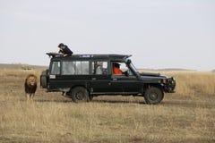 Lwa spacer za safari dżipem w dzikim maasai Mara Zdjęcia Royalty Free
