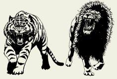 lwa tygrys Zdjęcie Stock