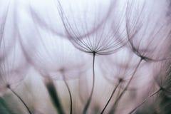 Löwenzahn-Blumenhintergrund der Weinlese purpurroter abstrakter Stockfoto