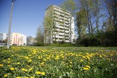 Löwenzahn und Wohngebäude Lizenzfreies Stockfoto