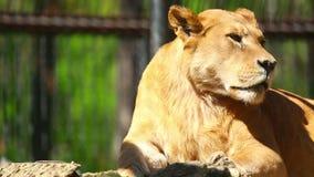 lwica zbiory