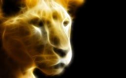 Löwin in der Dunkelheit Lizenzfreie Stockfotografie
