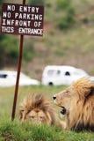 Lwy przed żadny wejście znakiem Zdjęcie Royalty Free