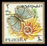 Lycaenid motyl, Euchrysops philbyi Zdjęcia Royalty Free
