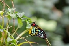 Lycaenidae is de second-largest familie van vlinders Het Eiland van Mainau royalty-vrije stock foto