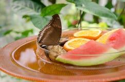 Lycaenidae is de second-largest familie van vlinders Het Eiland van Mainau stock afbeelding
