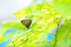 Lycaenidae na folha verde sob a luz solar Imagens de Stock Royalty Free