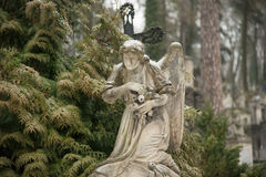 Lychakiv Cemetery. Weeping angel tombstone in famous Lychakiv Cemetery, Lviv Stock Photography