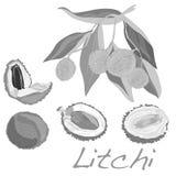 Lychee隔绝了 向量 免版税库存照片