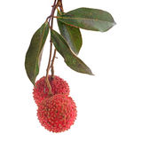 Lychee isolated on white background Royalty Free Stock Photos