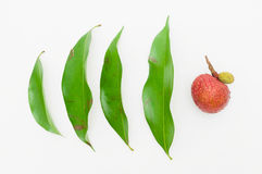 Lychee leaves. Fresh lychee with leaves on white background Royalty Free Stock Image
