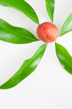 Lychee leaves. Fresh lychee with leaves on white background Stock Photos