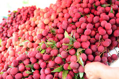 Lychee in the market. Sweet lychee red delicious  in asia Stock Image