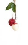 Lychee owoc Fotografia Royalty Free