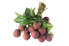Lychee tropical fruit Stock Images