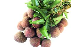 Lychee tropical fruit Royalty Free Stock Photos