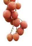 lychees Стоковые Фото