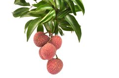 Lychees fraîches d'isolement Photographie stock libre de droits