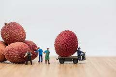 Lychees on truck. Delivery concept Stock Image