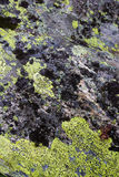 Lychens verdes y negros en substratos rosky Imagen de archivo