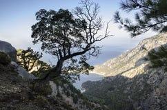 Lycian足迹,土耳其,在一个山腰的一棵偏僻的树有海的一个宏伟的视图 免版税库存图片