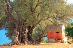 Lycian Sarkophag und alter Olivenbaum Stockfotos