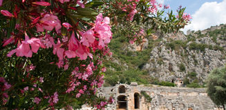 Lycian tombs and magnolia. Lycian tombs in Demre, Turkey Royalty Free Stock Photos