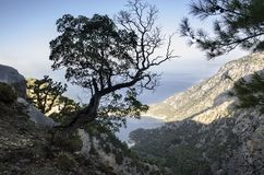 Lycian trail, Turkey, a lonely tree on a mountainside with a magnificent view of the sea. In the morning sun Royalty Free Stock Image