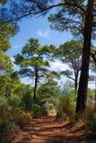 Lycian Way near Kalkan. Turquoise coast of Turkey, part of Lycian Way near Kalkan (vertical version) September 2008 royalty free stock images
