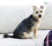 Lyckad grabb och hans favorit- husdjur i en hemtrevlig vardagsrum royaltyfri fotografi