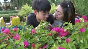 Lycklig asiatisk familjmoder och son som ser den rosa blomman Recorded hand-rymde i ultrarapid på 4K på 60fps lager videofilmer
