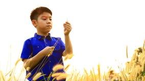 Lycklig asiatisk pojke med blomman av gräs som är rörd vid sommarvind arkivfilmer