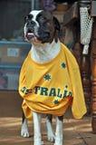 Lycklig Australien daghund som sammanfogar in på berömmar Royaltyfri Foto