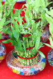 lycklig bambu Royaltyfri Fotografi