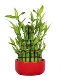 lycklig bambu Arkivbilder