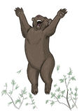 lycklig björn Arkivbild
