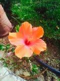 Lycklig blomma Arkivfoto
