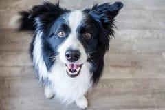 Lycklig Border collie hund på jordningen royaltyfri bild