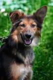 Lycklig brun hundstående i sommar arkivbilder