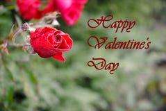 Lycklig dag för valentin` s - med den röda rosen Arkivfoto