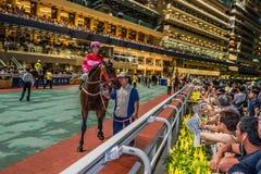 Lycklig dalracerbana Hong Kong för hästkapplöpning Royaltyfri Foto