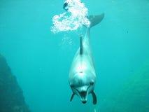 lycklig delfin royaltyfria bilder